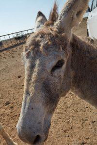 Bonaire Island Donkey Sanctuary
