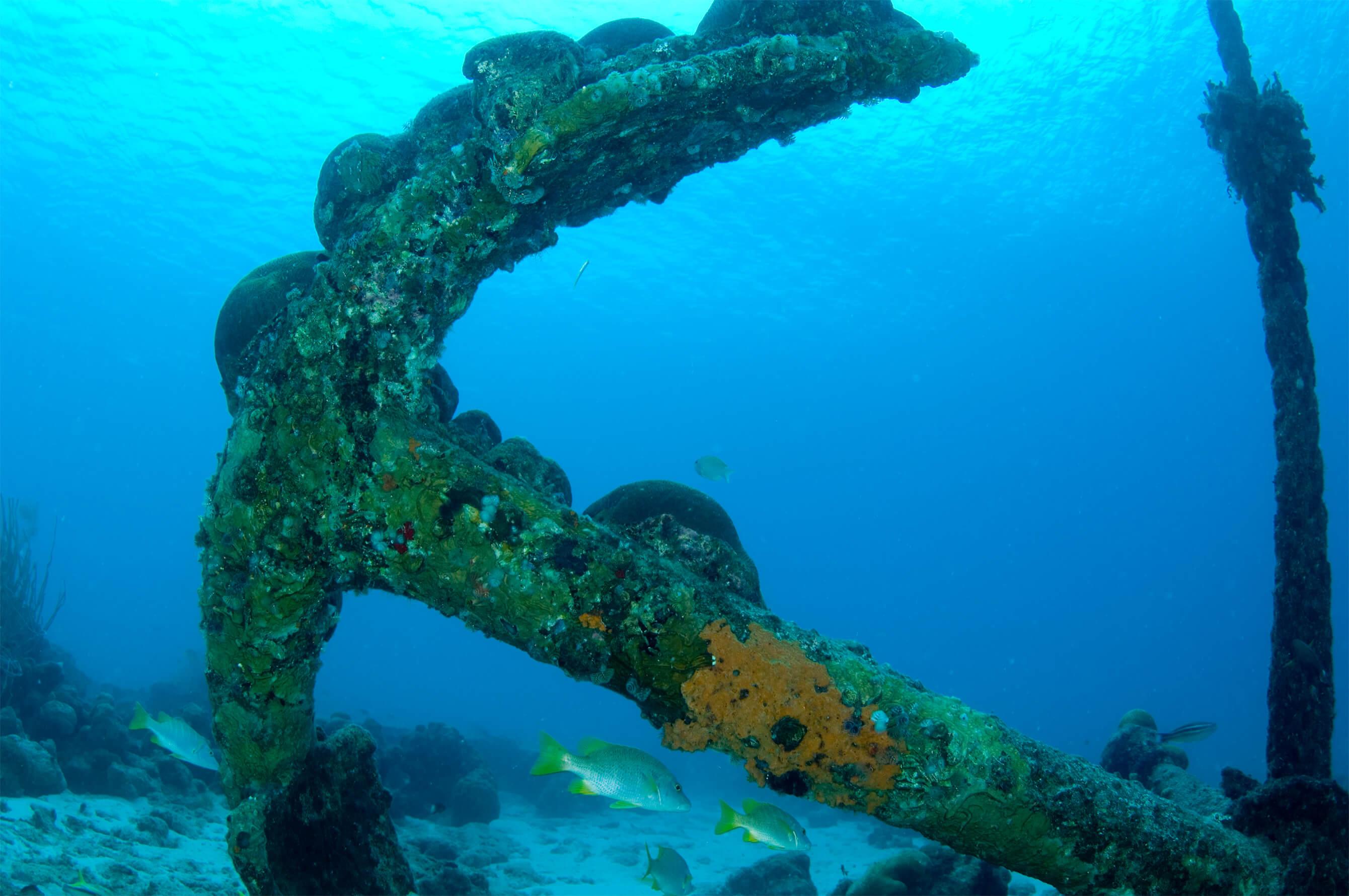 Bonaire_ScubaDiving_Diving_Boat_DiviDive_Diving_Underwater_Coral_Fish_12
