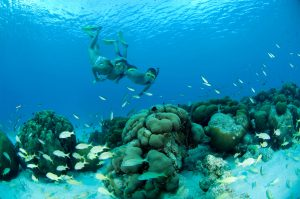 Snorkeling Girl Underwater