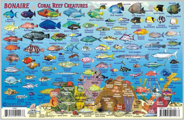Caribbean Fish Card Bonaire