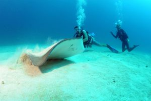 Sting Ray with Divers
