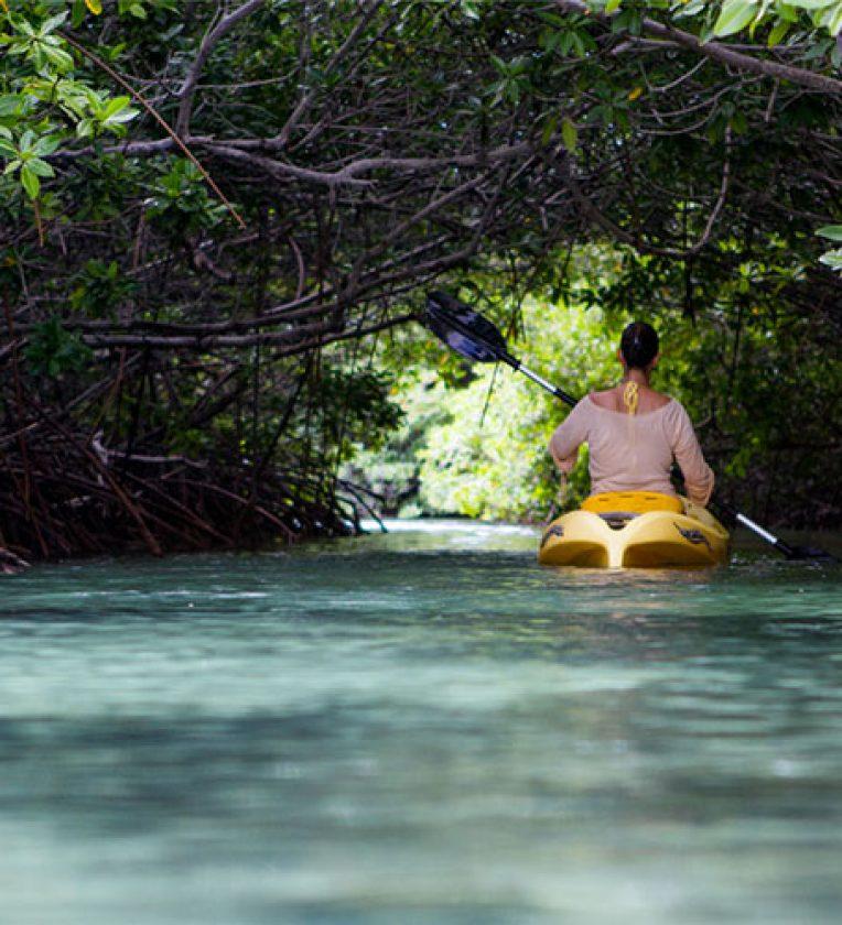 Mangove Kayaking Aquafari Bonaire