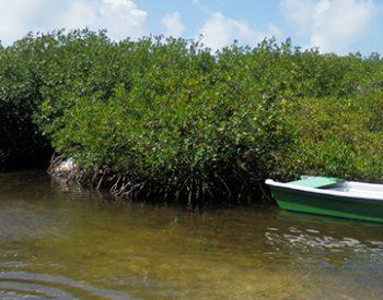 mangroves-2-xl