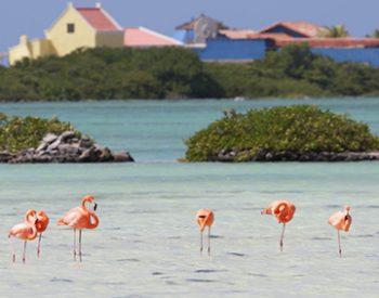 pekelmeer-flamingo-sanctuary-1-xl