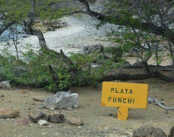 playa funchi2 1 xl