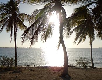 playa lechi 1 xl