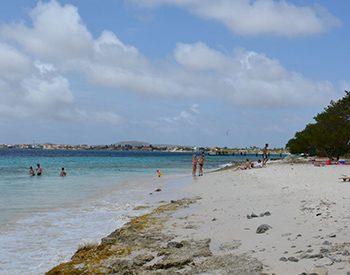 playa palu di mangel 1 xl
